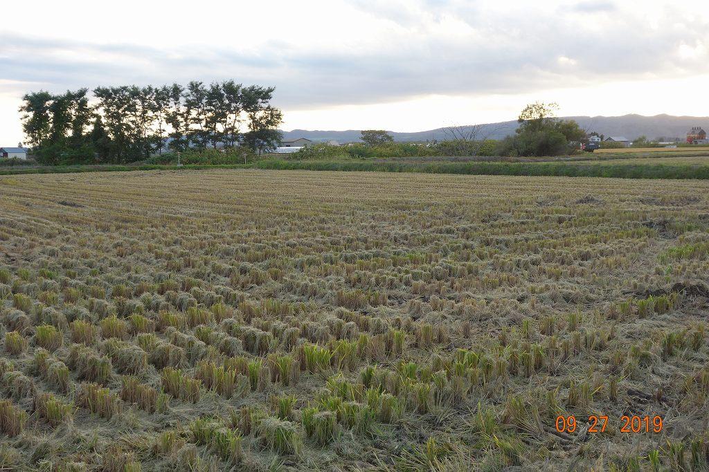 稲刈りのバイト